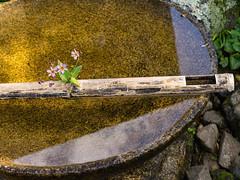 Tsukubai water basin (Tim Ravenscroft) Tags: tsukubai water bason bamboo reflection enkoji kyoto garden japan hasselblad hasselbladx1d