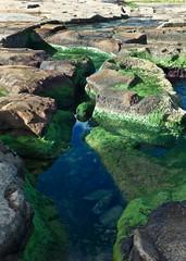 Rockpool (alicejack2002) Tags: malta sliema water rockpool leica shadow