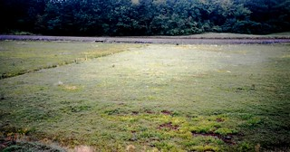 Cranberry Fields/Bogs in Massachusetts