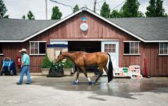 groom (Jen MacNeill) Tags: stall stable barn horse show devon groom