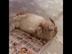 Cute bunny show off (tipiboogor1984) Tags: awwstations aww cute cats dogs funny