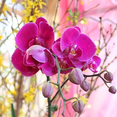 112. Orchid (Misty Garrick) Tags: arboretum universityofminnesotalandscapearboretum landscapearboretum flowershow
