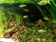 rhenen_2_026 (OurTravelPics.com) Tags: rhenen fish aquarium ouwehands dierenpark zoo