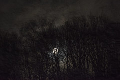 Spooky Night (Rudi Pauwels) Tags: 2019onephotoeachday moon clouds trees dark night spooky spookynight textures