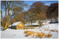Golden Barn (www.andystuthridgenatureimages.co.uk) Tags: barn old exmoor nationalpark winter snow ice sun beech wall sunshine light golden canon