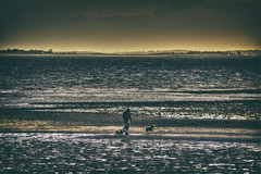 Walking the Dogs (nigdawphotography) Tags: dogs walkies beach sand shore coast sunset westmersea merseaisland essex