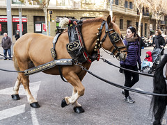 Tres Tombs de Barcelona 2019 (38) (Ismael March) Tags: barcelona trestombsdebarcelona trestombs santantoni sanantón