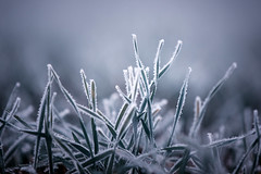 Paradise Frost (Carl's Captures) Tags: grass frost frosty fog foggy frozen freezing blades winter wintry flora mist misty nature crystals formations blue hues bokeh crystallized sparkly fuzzy moody minimalism northsidepark wheatonillinois dupagecounty outdoors nikond7500 sigma18300 photoshopbyfehlfarben thanksbinexo