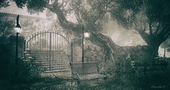 Aniron (larisalyn (Rachel)) Tags: trees gate bench mystery misty mist lamp fence building house secondlife