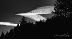Contrails Before Sunrise (Joan Gray) Tags: contrails piday sunrise bw