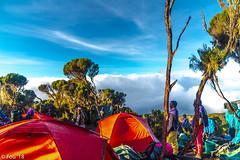 _FOU9677.jpg (Murray Foubister) Tags: africa gadventures spring treking tanazania flora travel 2018