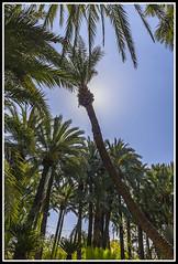 Paseando por Elche (edomingo) Tags: edomingo nikond610 nikkor1835 elche alicante huertodelcura plantas jardín