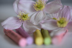 Pastel 6 (PhilDL) Tags: macromondays macro pastel pastels pastelcolours flower clematis clematismontana colour colours color colors colourful subtle subtlety softtones softfocus softness crayons oilpastels focalpoint blur blurring exposure contrast hues highlights shadows shades lightshade light levels dark vibrance foreground background camera dslr photography photo lens nikon nikonuk tamron nikond810 90mm