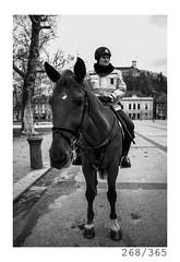 Policeman (Aljaž Anžič Tuna) Tags: police policeman policehorse horse ljubljana city center metropola slovenia photo365 project365 portrait portraitunlimited people street streetphotography streetportrait onephotoaday panorama 365 35mm 365challenge 365project nikkor nice naturallight nikon nikkor28mm nikond700 28mm 28mmf28 f28 dailyphoto day d700 bw blackandwhite black white blackwhite beautiful