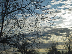 February Morning. (dccradio) Tags: lumberton nc northcarolina robesoncounty outdoor outdoors outside nature natural friday morning goodmorning fridaymorning winter february midfebruary sky cloud clouds tree trees treebranch branch branches treebranches treelimb treelimbs