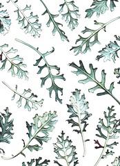 59461.10 Senecio cineraria 'Silver Dust' (horticultural art) Tags: horticulturalart seneciocinerariasilverdust seneciocineraria senecio dustymiller leaves psychedelic pattern mosaic