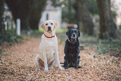 Buddies (Robbie Khan) Tags: animals canon canonphoto doggy dogs isleofwight khanphoto petfriendly pets robbiekhan theneedles wightlink doggies pup aww 85mm bokeh depth field 5d