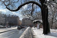 portal von rechts (dadiolli) Tags: haidhausen münchen munich germany snow schnee tree baum gasteig