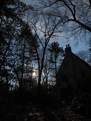 DSCN3590 (tombrewster6154) Tags: home weston ma christmas day 2018 late afternoon trees pretty branches arching blue sky early winter december 25 sun setting front yard drive way power lines house chimney windows shrubbery