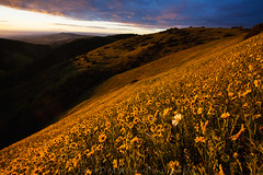 Dare to be different (DM Weber) Tags: sunrise morning flowers yellow hillside daisies monolopia carrizo plains california psa148 dmweber canon eos5dmkii landscape 2019 spring bloom