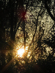 Sun And Trees. (dccradio) Tags: lumberton nc northcarolina robesoncounty outdoor outdoors outside nature natural tree trees woods wooded forest sun sunlight sunshine settingsun sunset fadingsun sky branch treebranch treebranches branches treelimb treelimbs silhouette beauty landscape canon powershot elph 520hs march spring springtime fridayfridayevening evening fridaynight