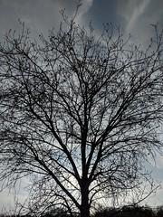 Winter Tree (Kelson) Tags: marsh nature hike southbay madronamarsh torrance california plants