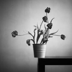 Still life on the edge (Arslan Ahmedov) Tags: stillife flowers black white bw blanc noir analogue medium 6x6 120 rolleiflex bulgaria