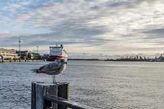 What are you looking at? (gutipictures) Tags: helsinki suomi seagull gaviota mar ocean sea baltic baltico puerto harbour deck hdr nikon finland finlandia sunset clouds sky cielo atardecer nubes cold freeze helado frio animal bird pajaro ave outdoor exterior