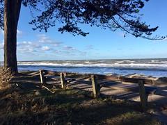 Meereseinsamkeit (Renate R) Tags: ostsee meer bank warnemünde diederichshagen balticsea bench tree