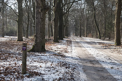 Winter Microadventure Hooge Vuursche (Hilversum)