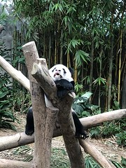 Singapore animal parks (jezzanz82) Tags:
