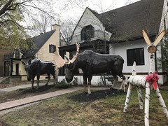 Front Lawn Moose Statues ... (Irene, W. Van. BC) Tags: frontlawnmoosestatues statues outdoorstatues buildingstatues gardenstatues moose moosestatues outdoors outdoorscenes outdoorart decorations specialdecorations lawns grass homes houses trees treesilhouettes treebranches 1001nights 1001nightsmagiccity 1001nightsmagicpeacock