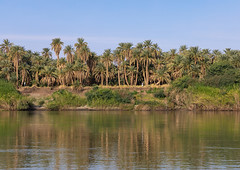 Plam trees on the bank of river Nile, Northern State, El-Kurru, Sudan (Eric Lafforgue) Tags: africa beautyinnature colorimage copyspace day elkurru environmentalconservation horizontal idyllic landscape landscapescenery nature nile nileriver nopeople nonurbanscene outdoors photography plamtrees reflection river rivernile riverbank ruralscene scenics scenicsnature sudan sudan180559 tourism tranquilscene tranquility travel traveldestinations water northernstate