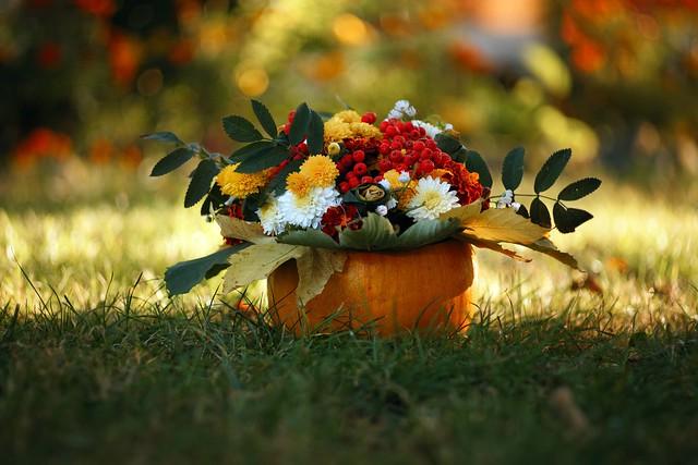 Обои осень, цветы, природа картинки на рабочий стол, раздел цветы - скачать