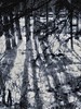 Afternoon delight (Edna Winti) Tags: alberta canmore ednawinti snow winter trees shadows riverside bowriver