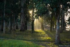 Árboleda de Isla Pedrosa (rubénaguado1) Tags: islapedrosa paisaje árboles bosque cantabria pontejos nikon d5200 nikon1685