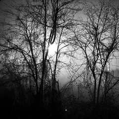 """Lights In The Fog"" (giannipaoloziliani) Tags: trees cielo sky capture obscurity sun sunlight nature rami branches dark darkness fog nebbia povalley monochrome monocromatico flickr nikonphotography nikoncamera nikon blackandwhite biancoenero sunrays alba"