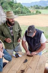 El Puro Rolling (lordspark80) Tags: tobacco tabacco cigar sigaro cubano cuba farmer farm rolling cohiba viñales el puro best world