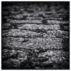 _IMG1555-Paris-Roubaix_7-100.jpg (TOF TOF) Tags: image 7100 smcpentaxda35mmf28macrolimited 100x2019 100 x the 2019 edition 100xthe2019edition image7100