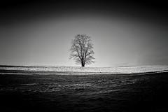 Lone Tree (Kjetil Øvrebø) Tags: light shadow minimalism monochrome white black bw norway trondheim skjetlein winter nature landscape tree