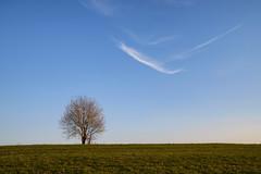 Isolé (Croc'odile67) Tags: nikon d3300 sigma contemporary 18200dcoshsmc paysage landscape arbre tree ciel cloud sky nuage