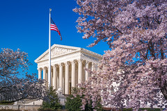SCOTUS Surrounded by Blossoms (John Brighenti) Tags: dc washington districtofcolumbia capitolhill cherry blossoms spring april sunny weather sky blue pink purple flowering trees blooms bloom tree branches sticks twigs trunk wood plant growth life urban city capital us unitedstates america sony alpha a7rii ilce7rm2 tamron 2875mm emount femount nex ilce bealpha sonyshooter zoom wide angle lens supreme court justice judges scotus building columsn government architecture