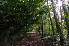 through the forest (Paul Wrights Reserved) Tags: tunnel forest sun sunstar sunstars tree trees path pathway light diminishing perspective leading leadinglines woods sunlight pentax k1 pentaxk1