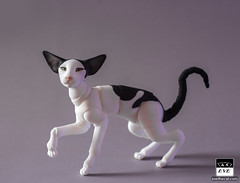 Extreme Oriental Kitty! (BJD Pets (dolls.evethecat.com)) Tags: bjd bjds bjdsale bjdforsale bjdoll bjddoll bjdlover bjdphoto bjdart dolls evestudiodolls artdoll dollart cat bjdpets kitty cute bjdcat