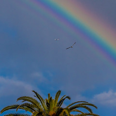 Seagull and Airplane Flying Under the Rainbow Over Macy's at the Lakewood Center Mall (SCSQ4) Tags: airplane airplaneflyingundertherainbow birdflyingundertherainbow california cloudy cloudyskies lakewood lakewoodcentermall macys rainbow seagull