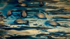 Dolphins (ana_kapetan_design) Tags: paint ice water blue dolphin art acrylic fish sea
