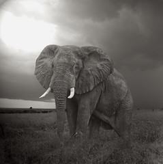 Africa (Mostly Tim) Tags: uganda africa