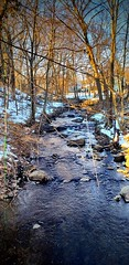Spring Is Coming (SurFeRGiRL30) Tags: nature mollyannesbrook brook creek winter stream woods beautiful flowing trees bare nj newjersey