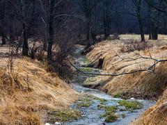 brook... (w3inc / Bill) Tags: 80 w3inc nikon aw130 brook rain fields chestercounty digital 365 2019