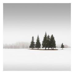 Winter Conifers I (Vesa Pihanurmi) Tags: trees woods conifers spruce fir winter snow nature espoo finland minimalism minimalistic
